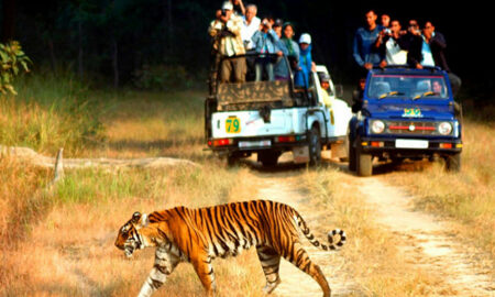 тигриный-заповедник-Corbett-National-Park