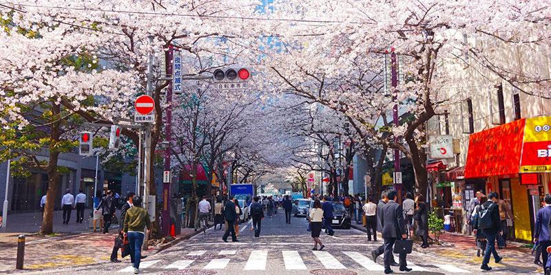 10-вещей-в-Японии,-которые-всех-туристов-потрясают-до-глубины-души