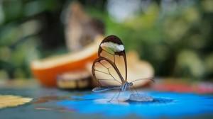 Грета Ото – стеклянная бабочка
