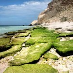 Остров Сокотра. Йемен