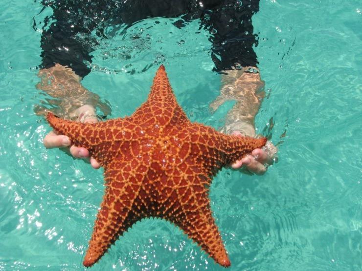 Пляж морских звезд. Панама