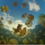 Медузное озеро в Палау