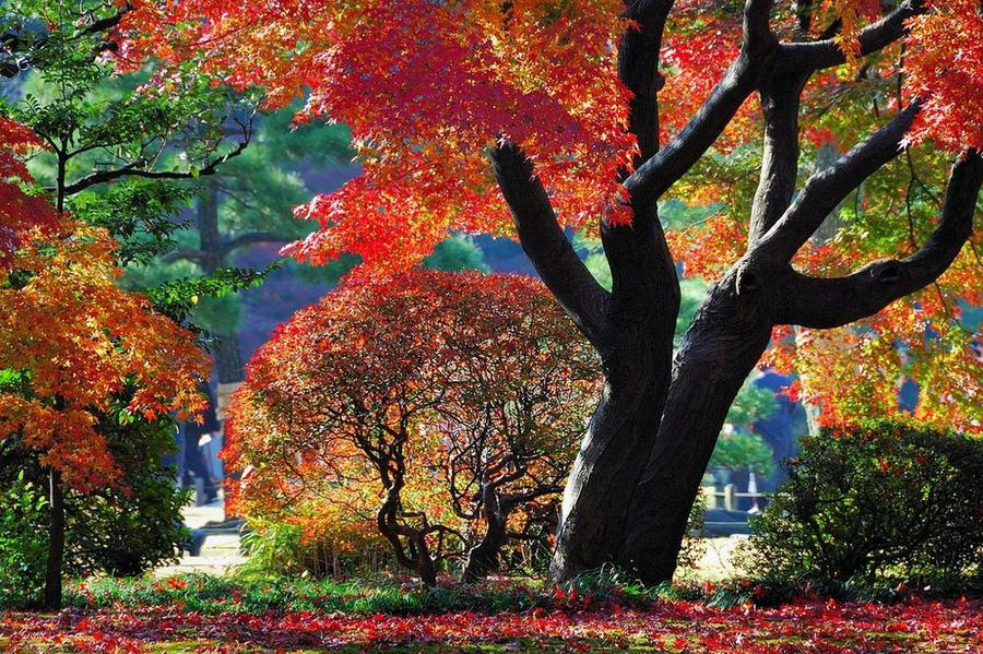 Сад Рикугиэн. Япония