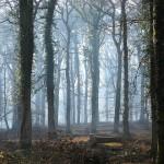 Национальный парк Нью-Форест. Англия